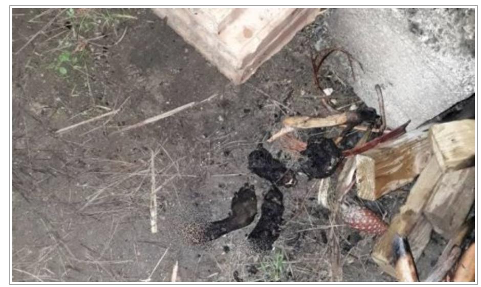 Le migrant nigérian cuit un chien et le mange : c'est une coutume dans son pays