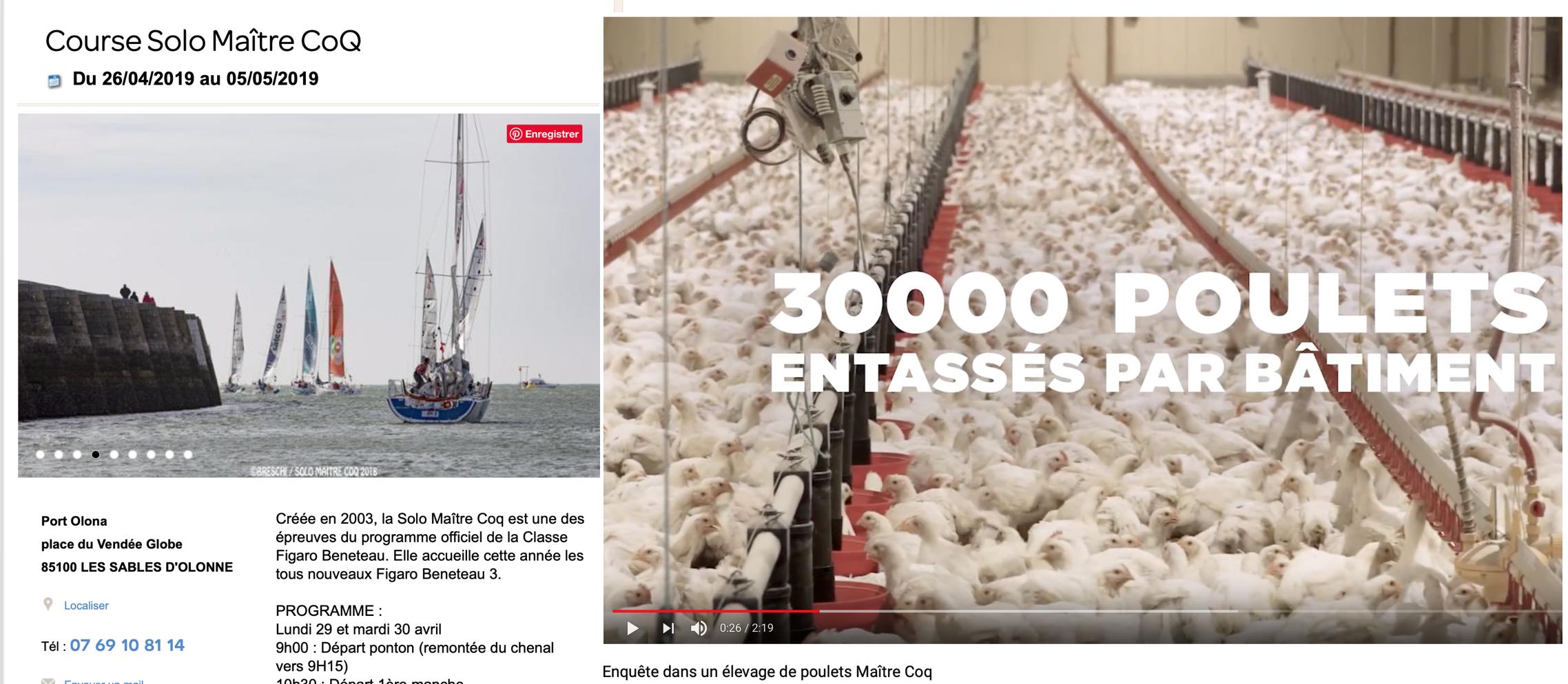 «Course solo Maître Coq»:  Maître Coq c'est les poulets (halal ?) en batterie, vision atroce…