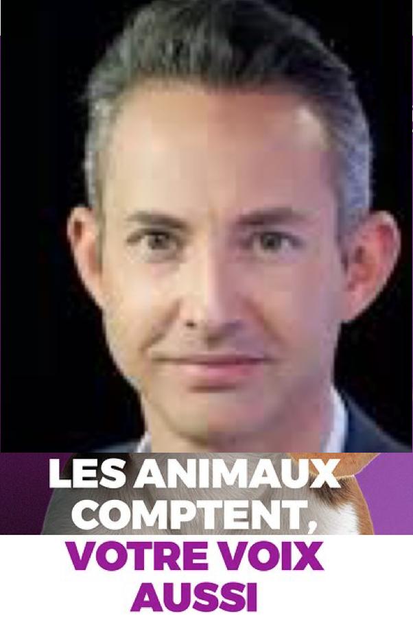 Julien Odoul a mille fois raison, Brossat «pèse comme un épagneul breton», et pas qu'électoralement  !