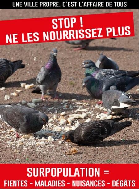 Traitons les migrants au moins aussi humainement que les pigeons!