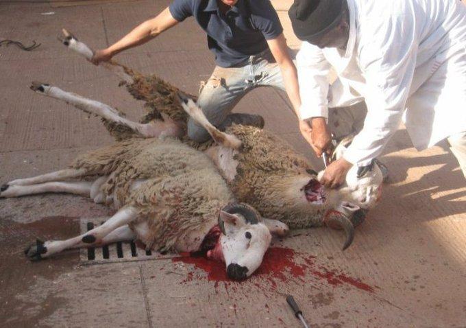 L' Aïd-El-Kebir c'est dégueulasse ; l'Aïd-El-Kebir à la Mecque… préparez vos sacs à vomi