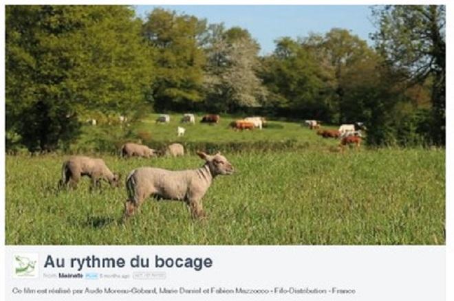 Plaidoyer pour notre élevage(1): exploitations agricoles cherchent repreneurs d'urgence…