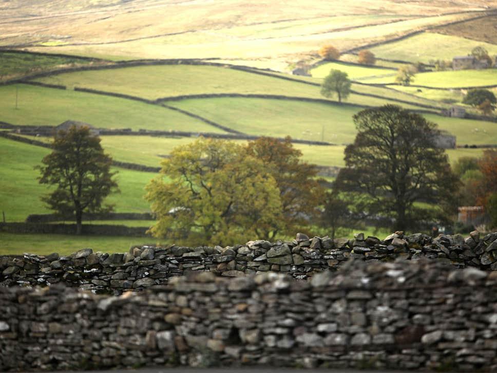 Le cerveau de l'homme est adapté à la tranquillité rurale