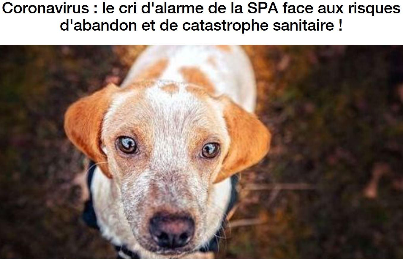 «La SPA n'est pas submergée à cause du coronavirus» : un bobard de plus de l'AFP ?