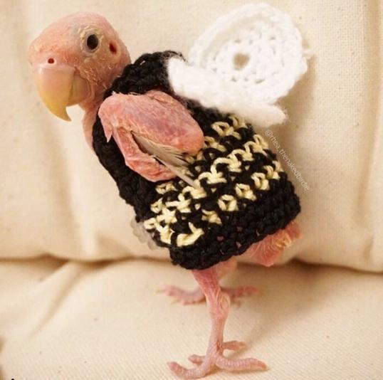 Sibeth se refait une santé : toutes ces conneries, c'était la faute à ses plumes !
