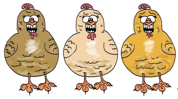 Chez eux, les poules ont des crocs!