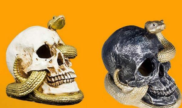 Plus rien dans le crâne ? Rapatriement en Algérie des crânes de soi-disant résistants algériens à la colonisation