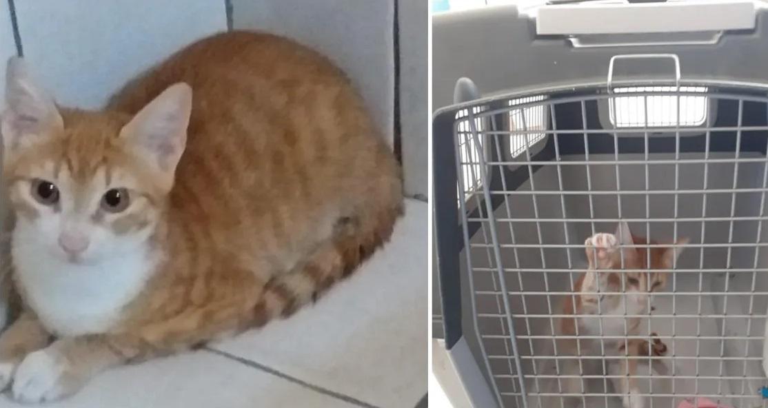 Le chat du migrant tunisien mis en quarantaine pendant… 6 mois !